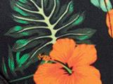 Hibiscus Tropical
